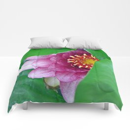 Pink Water Lily Comforters