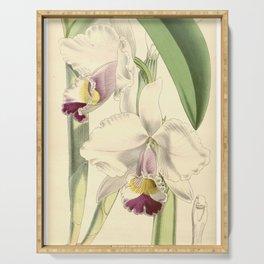 Cattleya candida (as Cattleya quadricolor) Curtis' 91 (Ser. 3 no. 21) pl. 5504 (1865) Serving Tray