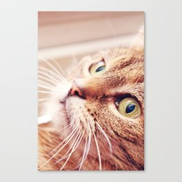 Sweet Lilly  Canvas Print