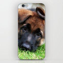 Playful Puppy. iPhone Skin
