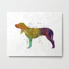 Swiss Hound in watercolor Metal Print