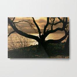photogenic tree Metal Print