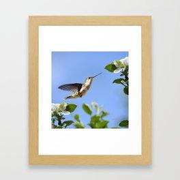 Spring Hummingbird Framed Art Print