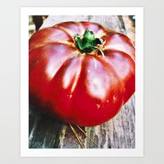 Tomato Heirloom Art Print