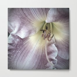 Pink Lily Close Up Metal Print