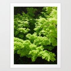 Japanese Maple Green Art Print