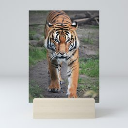 The Bengal Tiger Mini Art Print