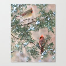 Winter Pair #3 Cardinals Canvas Print