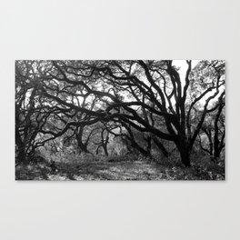 Oak Tree Tunnel Canvas Print