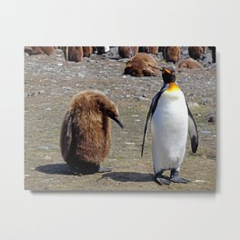 King Penguin and Chick Metal Print