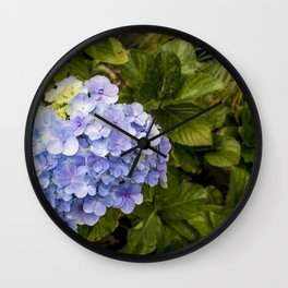 Lavender Hydrangeas in Nicaragua Wall Clock