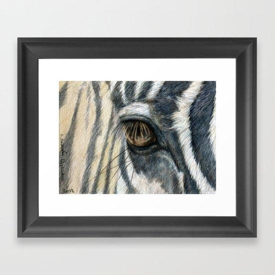 Zebra 808 Framed Art Print