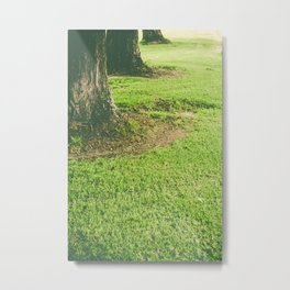 Row of trees Metal Print