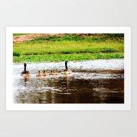 Canada Goose and Goslings II Art Print