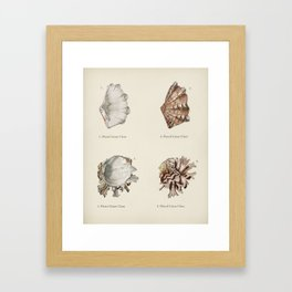 Fluted giant clam and Murex illustrated by Charles Dessalines D' Orbigny (1806-1876) Framed Art Print