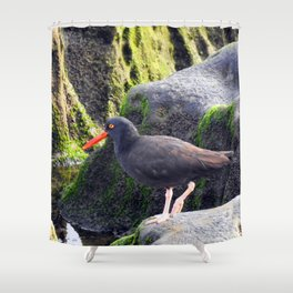 Black Oystercatcher Shower Curtain