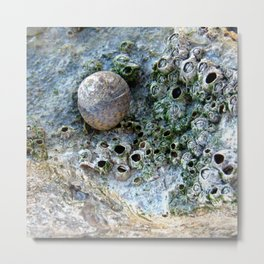 Nacre rock with sea snail Metal Print