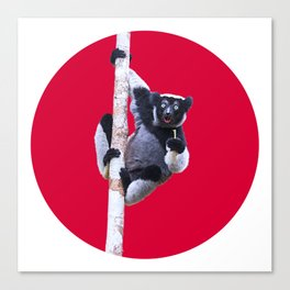Indri indri sitting in the tree Canvas Print