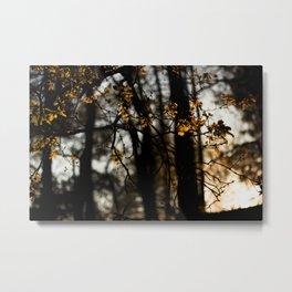 trees copper Metal Print