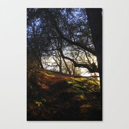 Trail Through Nature Canvas Print
