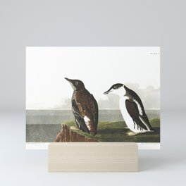 Slender-billed Guillemot by John Audubon Mini Art Print