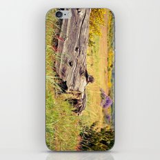 beach log iPhone & iPod Skin