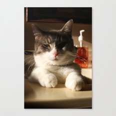 Sink Kitten Canvas Print