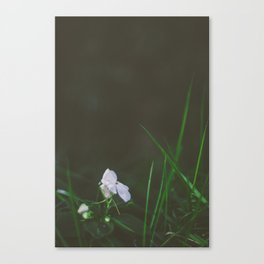 Lonely Flowers 02 Canvas Print