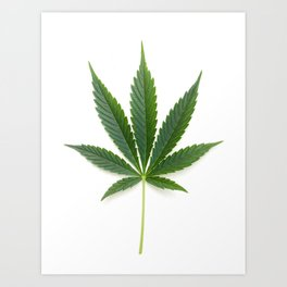 Cannabis/Marijuana/Weed leaf Art Print