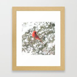 Cardinal on a Snowy Cedar Branch (sq) Framed Art Print