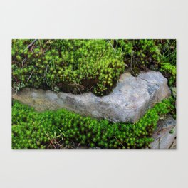 Vibrant Moss Canvas Print