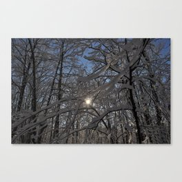 Into the Woods - Minnesota Canvas Print