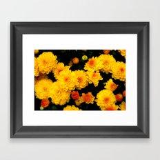 Golden Dew Drops. Framed Art Print