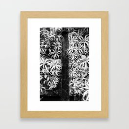 Air Plant Waterfall Framed Art Print