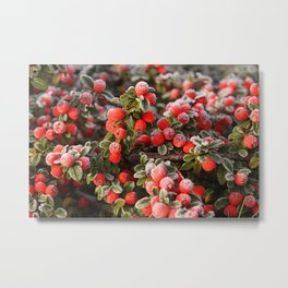 Berry Cold Metal Print