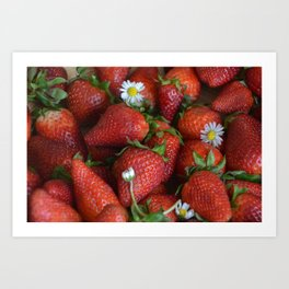 Macro strawberry and camomile with natural light Art Print