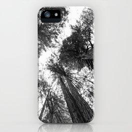 Muir Woods - California iPhone Case