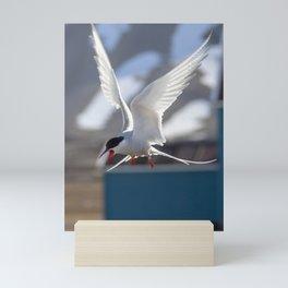 Tern's shriek Mini Art Print
