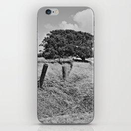 Tree (Hawaii) iPhone Skin