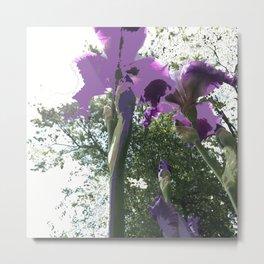 Giant Iris Stalks, purple green white, modified Metal Print