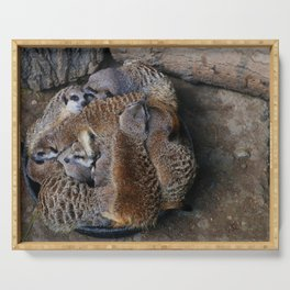 Bowl of Meerkats Serving Tray