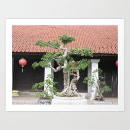 Old Bonsai Pine Tree, Hanoi, Vietnam Art Print