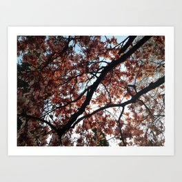 Cherry Blossoms in Seattle Art Print
