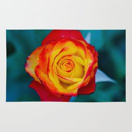 Sunset Rose Rug