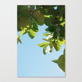 Sea Grape Blues, Miami Canvas Print