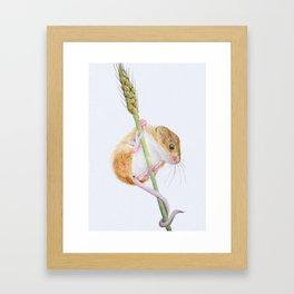 British Wildlife - Harvest Mouse Framed Art Print