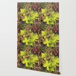 Foliage Fiesta With A Touch Of Begonia Wallpaper