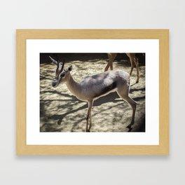 three legged deer Framed Art Print