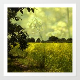 colza field in late summer Art Print