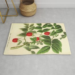 Handcoloured lithograph from Louis van Houtte-Rubus rosifolius-french vintage Rug